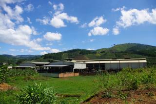 コーヒー農園へ 919