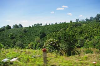 コーヒー農園へ900