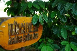コーヒー村1593