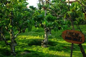 コーヒー村1628