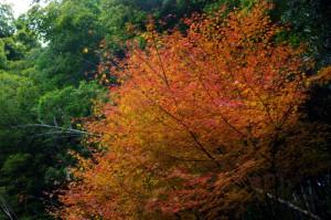 和草イベント師走の市2013.12.1.2 004