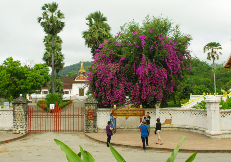 ルアン寺院 183